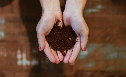 Le lombricompostage, le traitement à domicile des déchets organiques