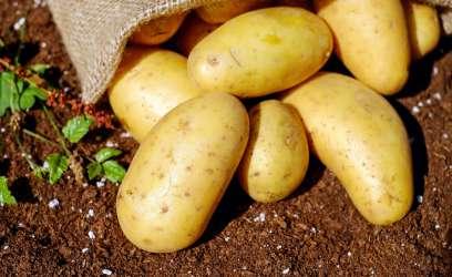 Comment planter des pommes de terre chez soi ?