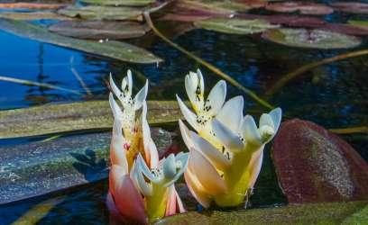 Les bases de soins pour les plantes aquatiques