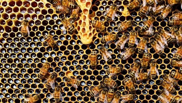 Quels sont les bienfaits du pain d'abeilles ?